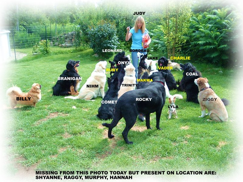 Opening a doggy daycare or pet resort what you need to for Best doggy day care