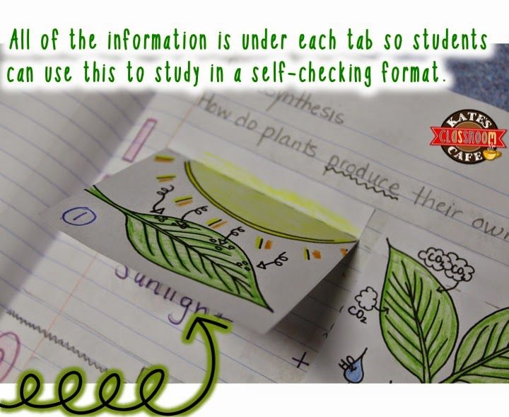 Photosynthesis for interactive notebooks science classroom kates science classroom cafe photosynthesis for interactive notebooks ccuart Image collections