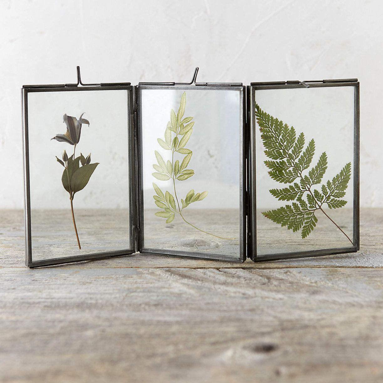 "With multiple panels for displaying preserved blooms, this hinged frame makes an understated addition to indoor décor.- Metal, glass- Wipe clean with glass cleaner- Individual frame: 5.5""H, 3.5""W- Imported2-fold: 6""H, 8""W3-fold: 6""H, 12""W"