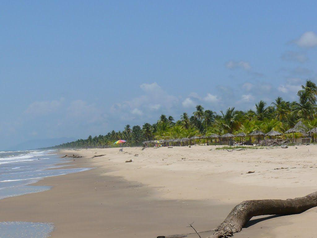 MIRANDA, municipio Pedro Gual. Bosque Mar.