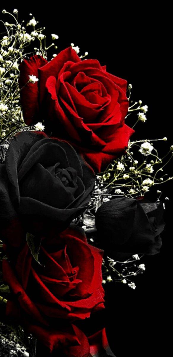 Jerry On Twitter Rose Wallpaper Black Roses Wallpaper Red Roses Wallpaper