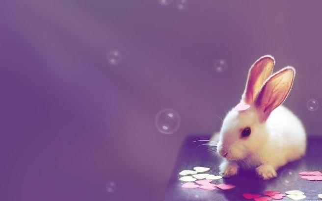 Rabbit Tricks Cute Desktop Wallpaper Rabbit Wallpaper Cute Bunny Pictures