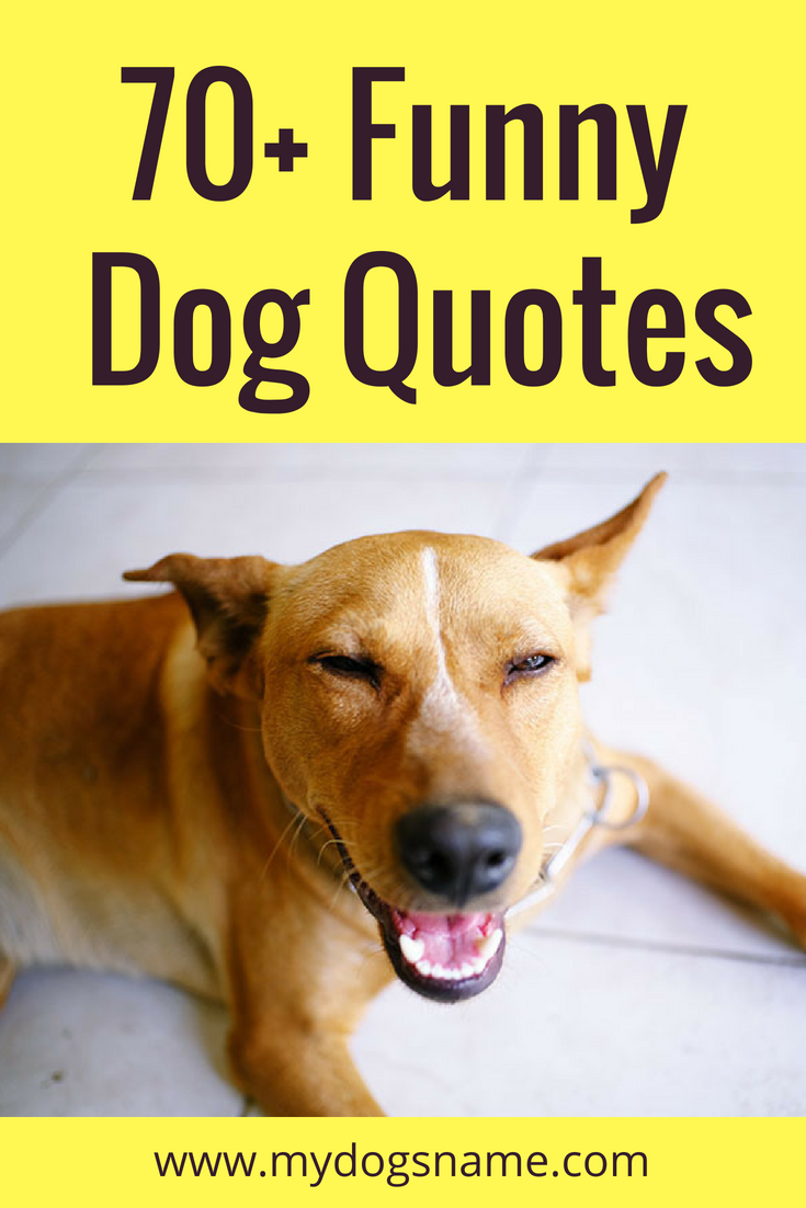 70 Funny Dog Quotes And Sayings My Dog S Name Dog Quotes Funny Dog Quotes Cute Dog Quotes