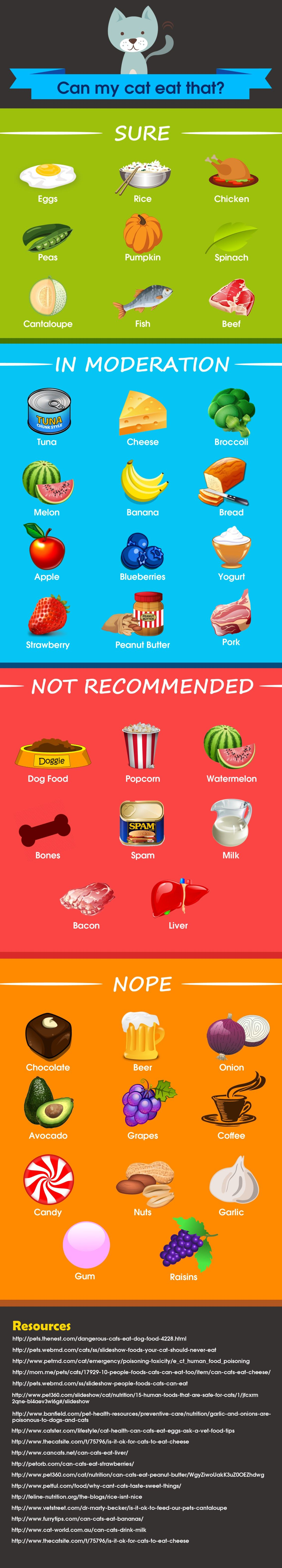 What do cats eat? Here are 40 human food that are safe