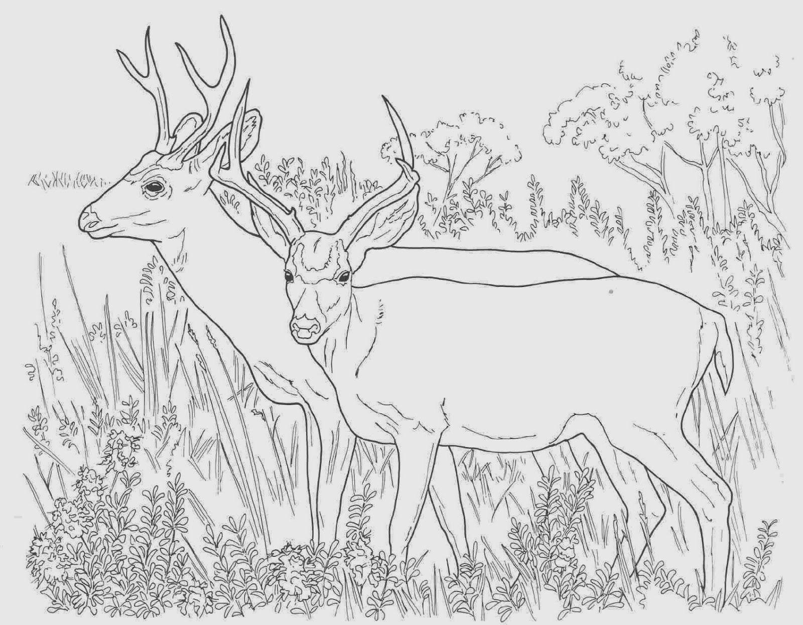 deer+coloring+pictures+(1).jpg (1600×1246) | deer | Pinterest