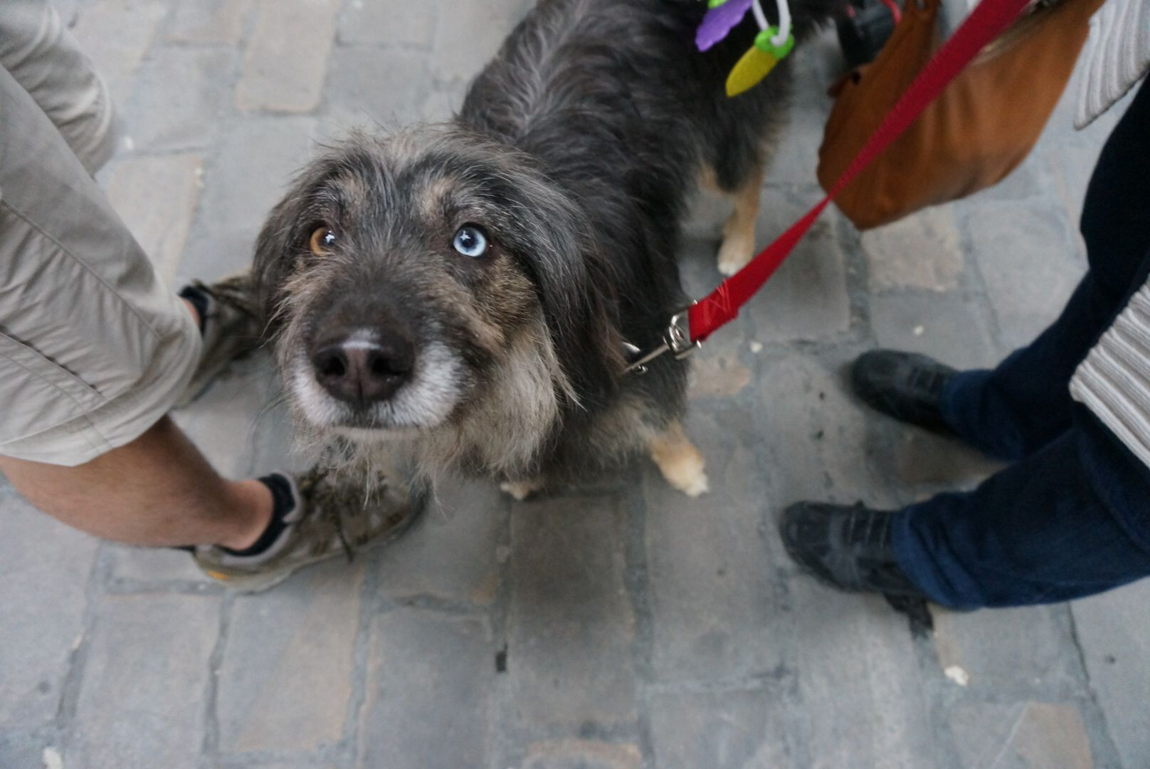 Spain Pamploña.. 까미노에서 처음 만난 도시... 까미노에서 처음 만난 오드아이 강아지.. #odd eye dog.. Muy bonita~
