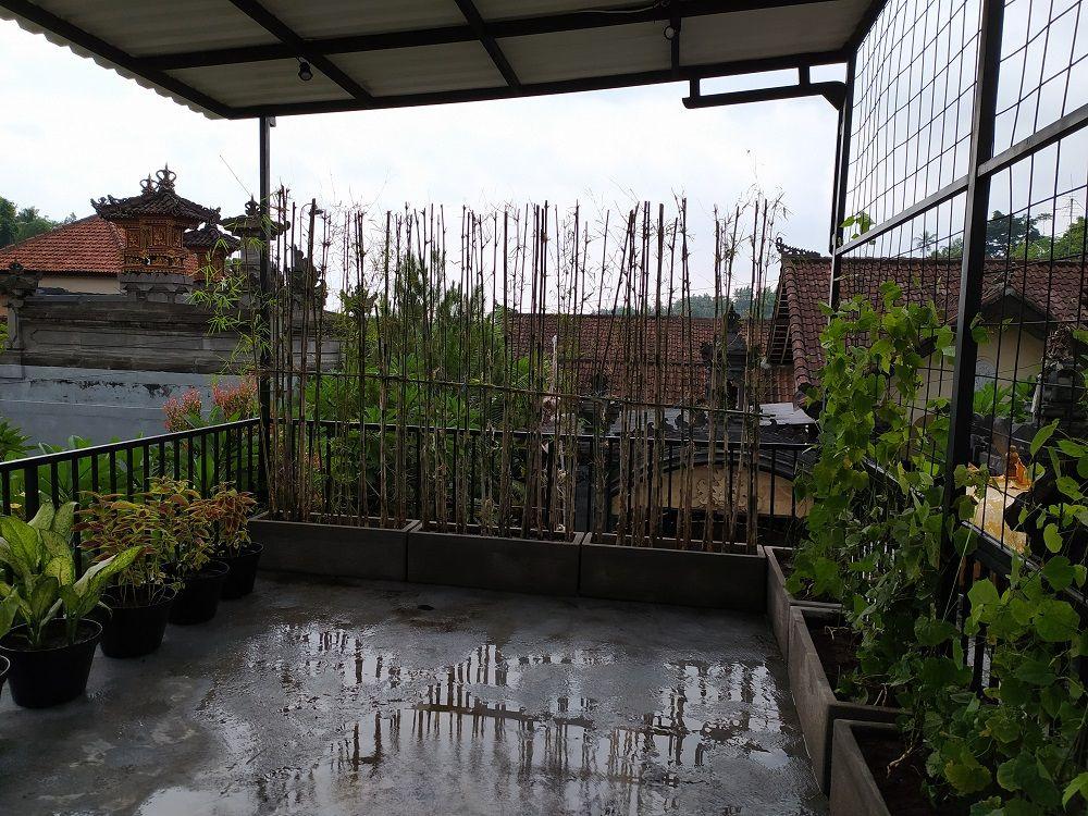 Taman Teras Balkon Taman Vertikal Taman Teras Tanaman Indoor