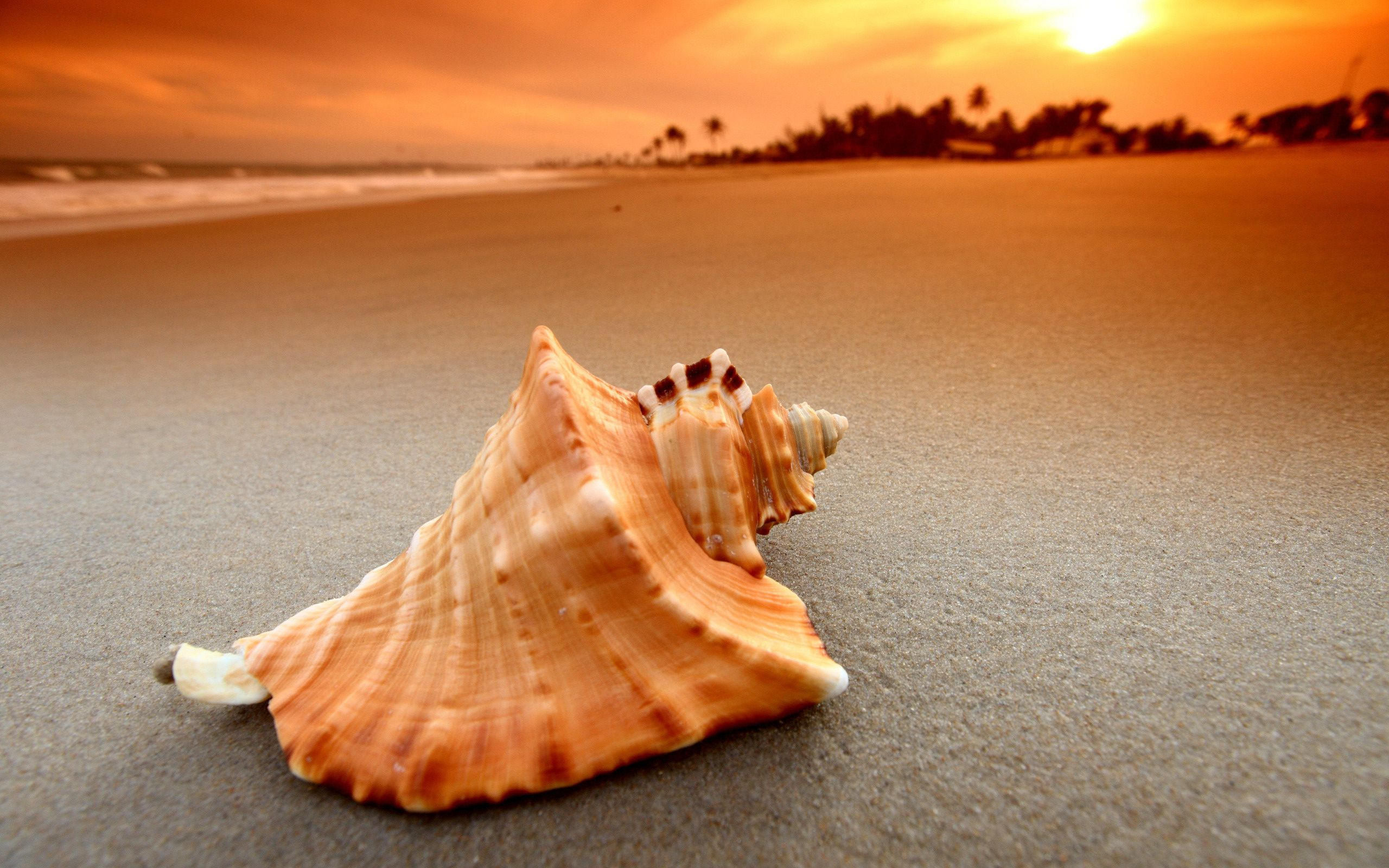 Ocean Sand Shells wallpaper Ocean Sand
