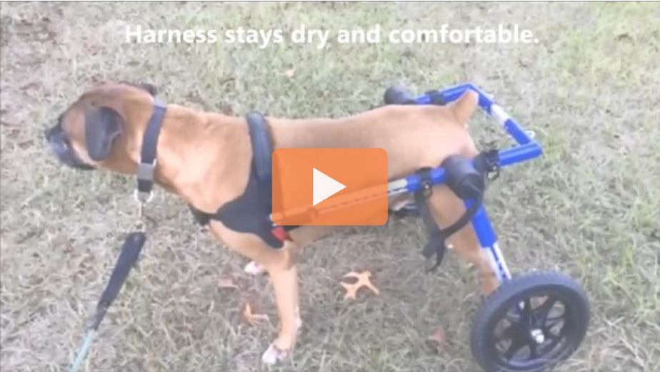 Walkin Wheels Dog Wheelchair Wheelchairs For Dogs Of All Sizes