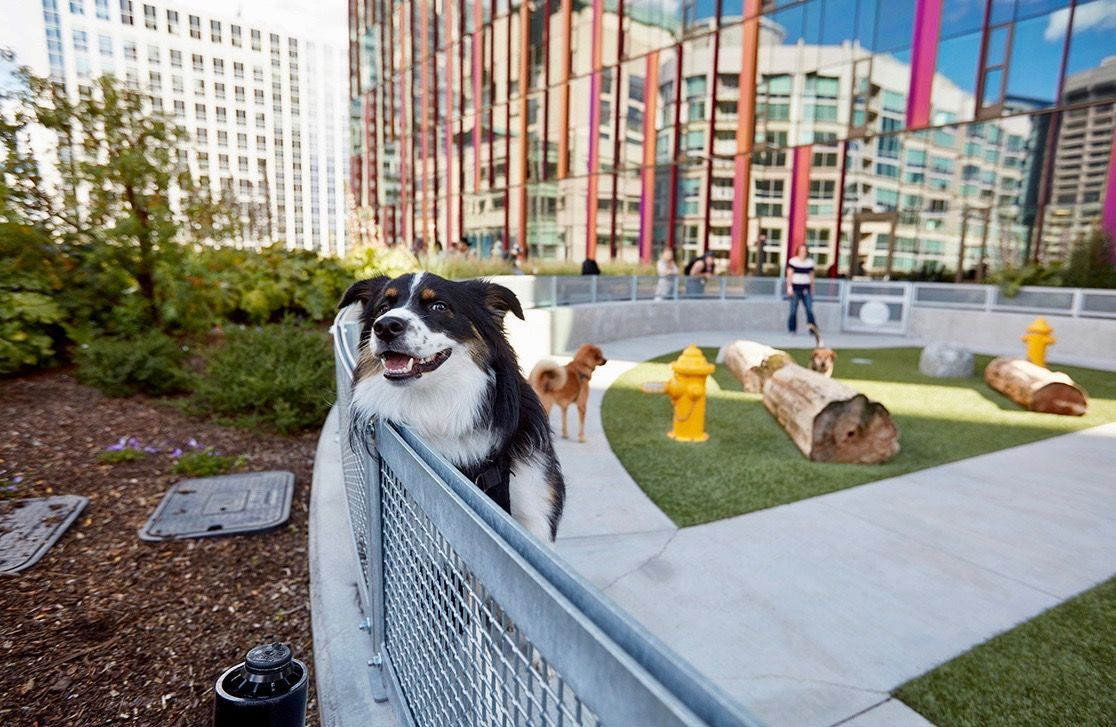 Why Amazon Let 4 000 Dogs Into Its Seattle Headquarters Images