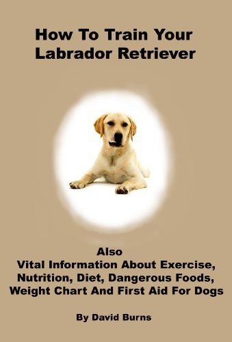 How To Train Your Labrador Retriever Also Vital Information About