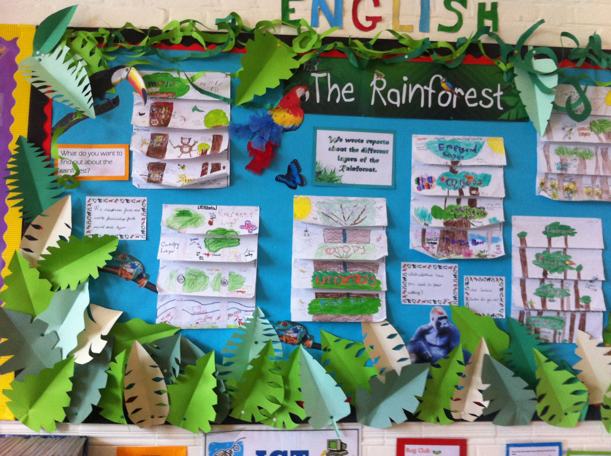 The Rainforest Display Y3