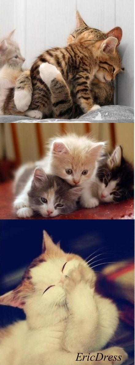 Pin By Kristina Carey On Purr Fect Cats Lovely Creatures Animals Cute Animals
