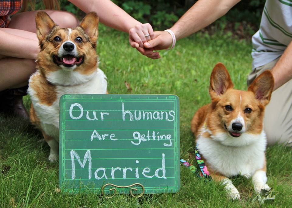 Pin By Amber Snyder On My Love Of Corgis Nerd Wedding Wedding Pets Cute Engagement Announcements