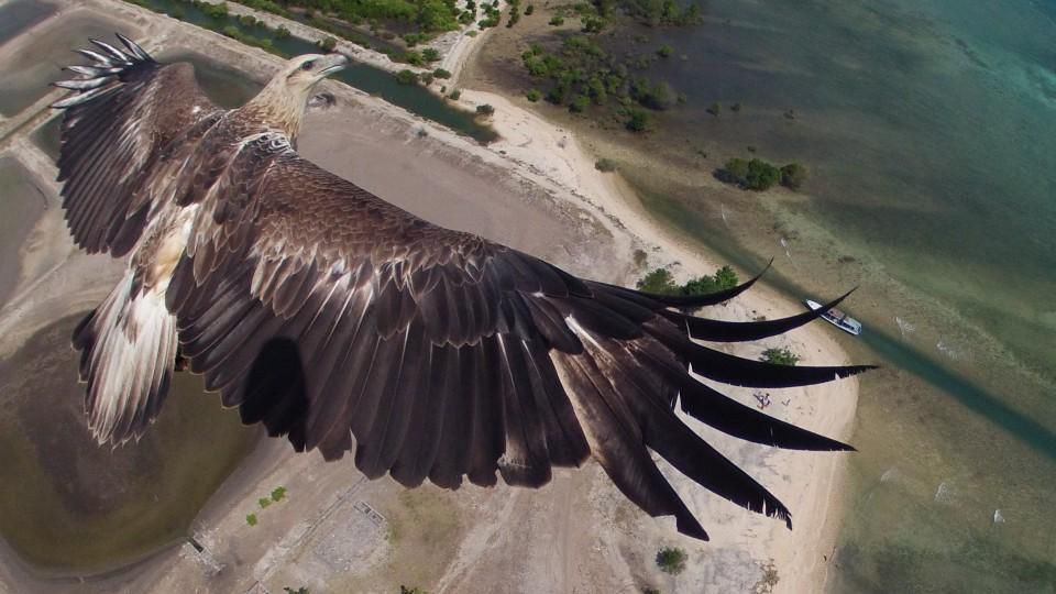 An eagle soaring in the Bali Barat National Park in Indonesia