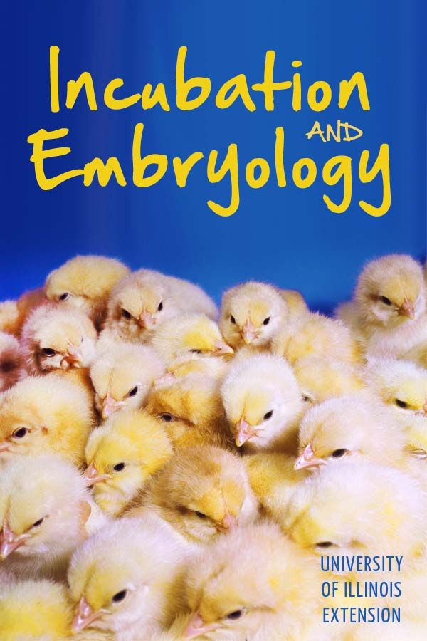 """""""Incubation and Embryology"""": A hands-on project that teaches science and respect for life."""