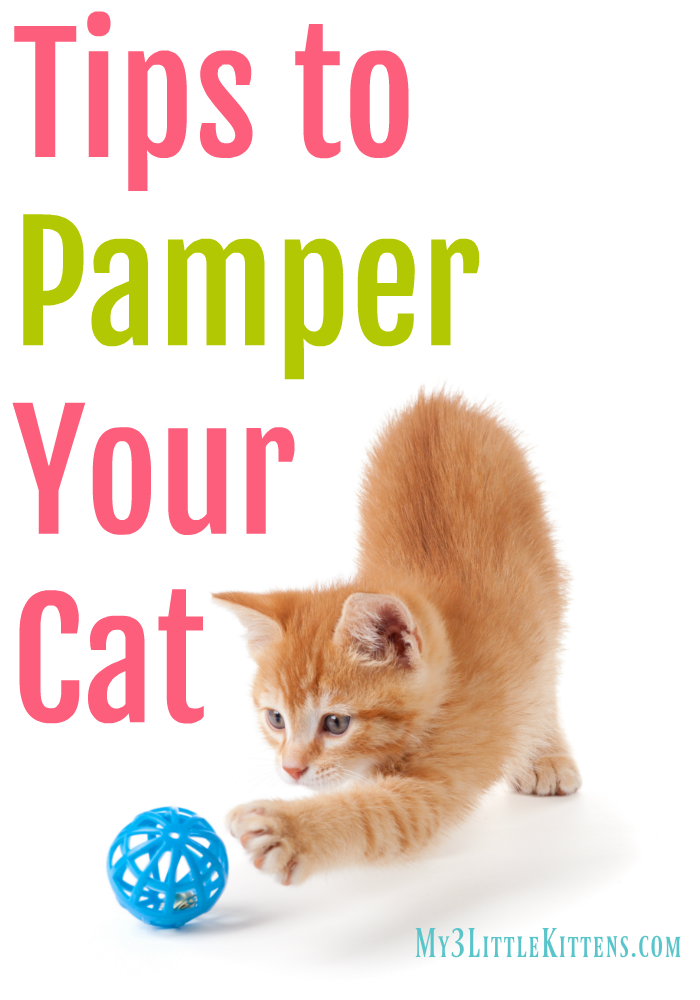 4 Easy Tips To Pamper Your Cat My 3 Little Kittens Cats Kitten Care Cat Spray