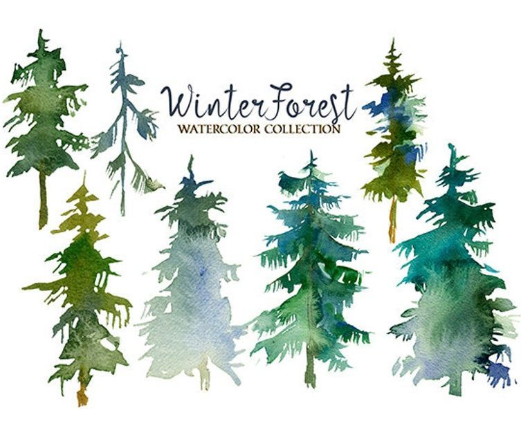 Pine Trees Watercolor Clipart Fir Trees Png Christmas Winter