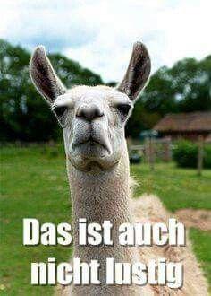 Pin Von Sarah Weidner Auf Tiere Animals Lustig Tiere Lamas