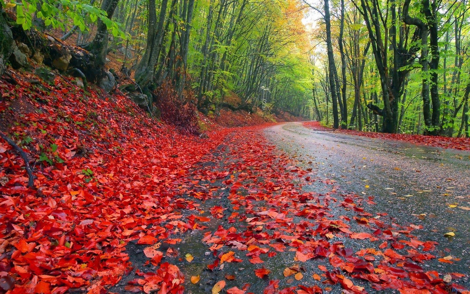 Rainy Day Wallpaper Rainy Autumn Forest Wallpaper Rainy