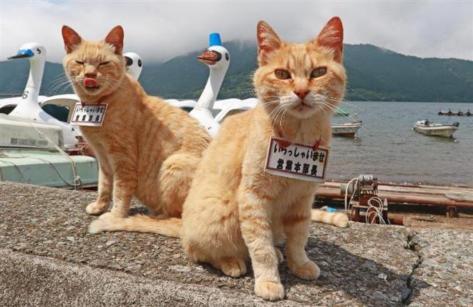 吾輩は 管理職 ニャのだ 箱根 芦ノ湖の看板猫 猫 子猫 猫 ペット ぬいぐるみ