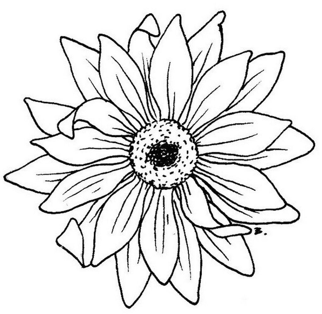 Blumen Ausmalbilder Kostenlos Ausdrucken : Daisy Flower Silhouette Blumenbilder Zum Ausdrucken 1024 1000
