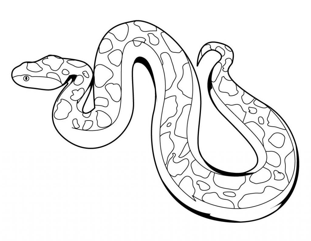 Free Printable Snake Coloring Pages For Kids Zoo Animal Coloring Pages Snake Coloring Pages Zoo Coloring Pages