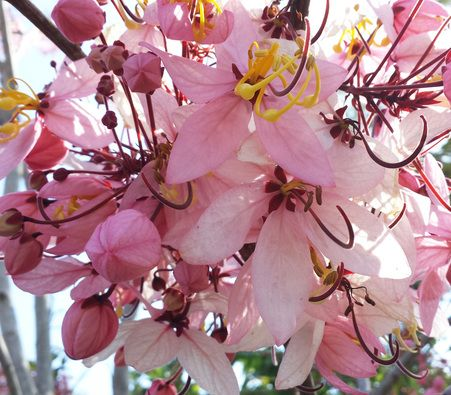 Cherry Blossoms 2 Spring Landscape Cherry Blossom Scenery