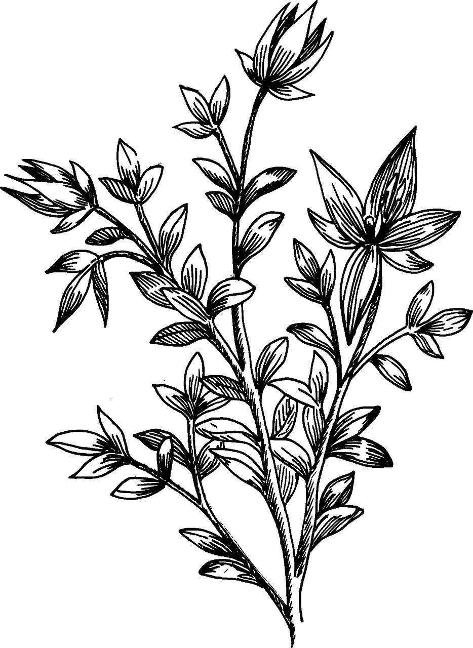 Flower Leaf Line Drawing : Flower biology plant leaves transparent image