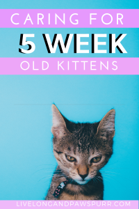 Pin On New Kitten Info