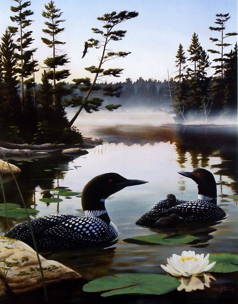Leo Stans Boundary Waters Loon Beautiful birds, Nature