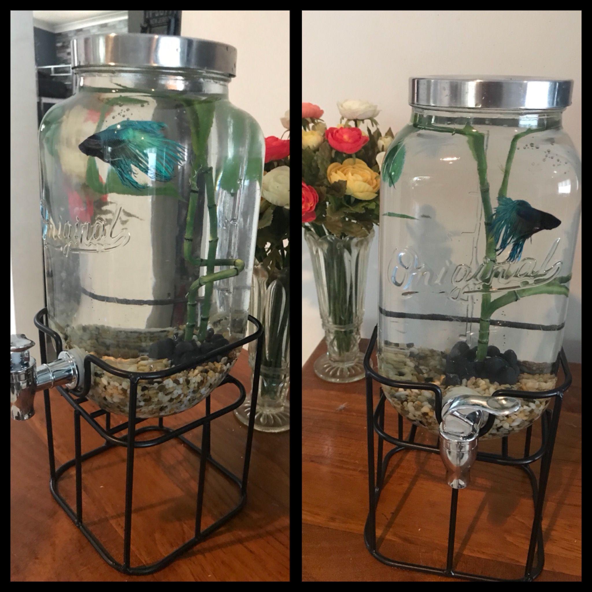 Siamese fighting fish betta glass jar tank set up natalieus work