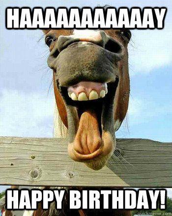 957123605e3ea641c9d2802274ac77d4 horse wishing happy birthday to girl happy birthday memes,Happy Birthday Sick Meme