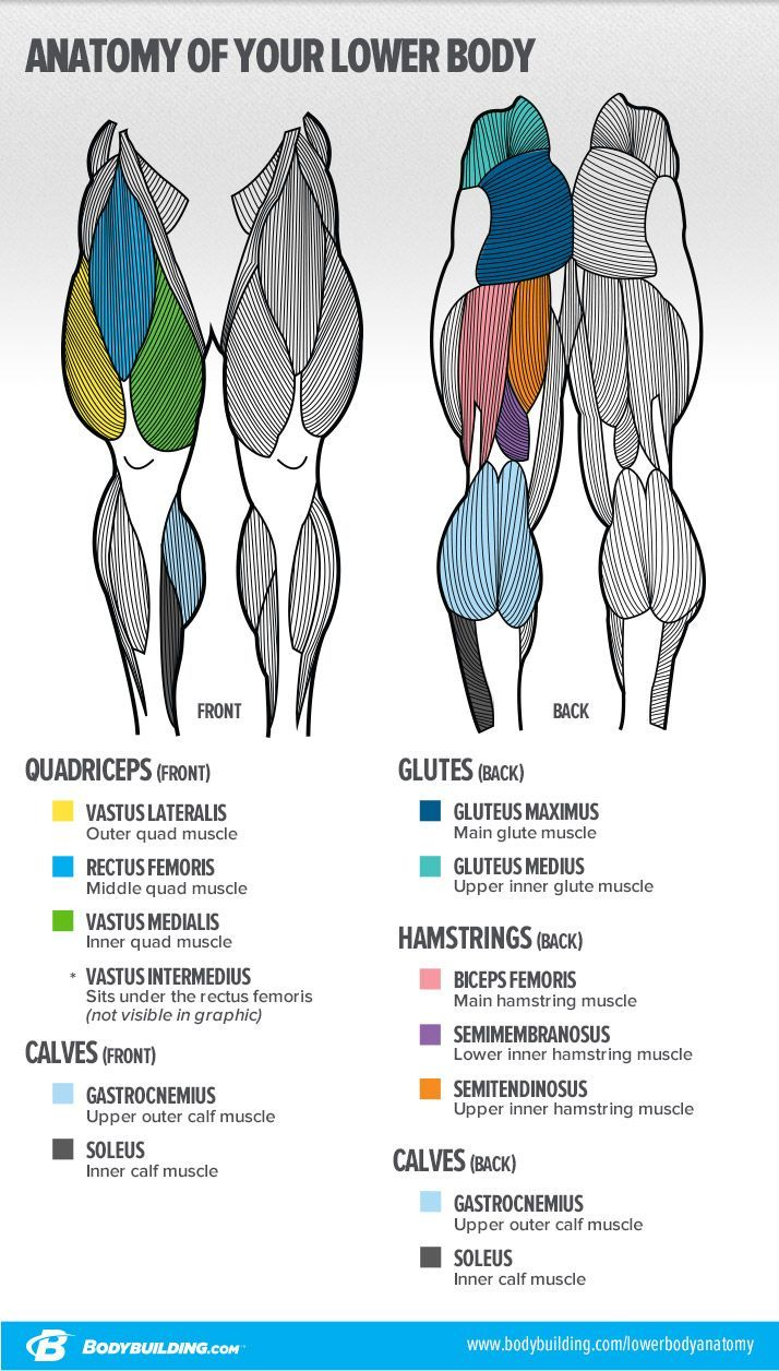 7 Lessons That Will Transform Your Legs! | Músculos y Anatomía