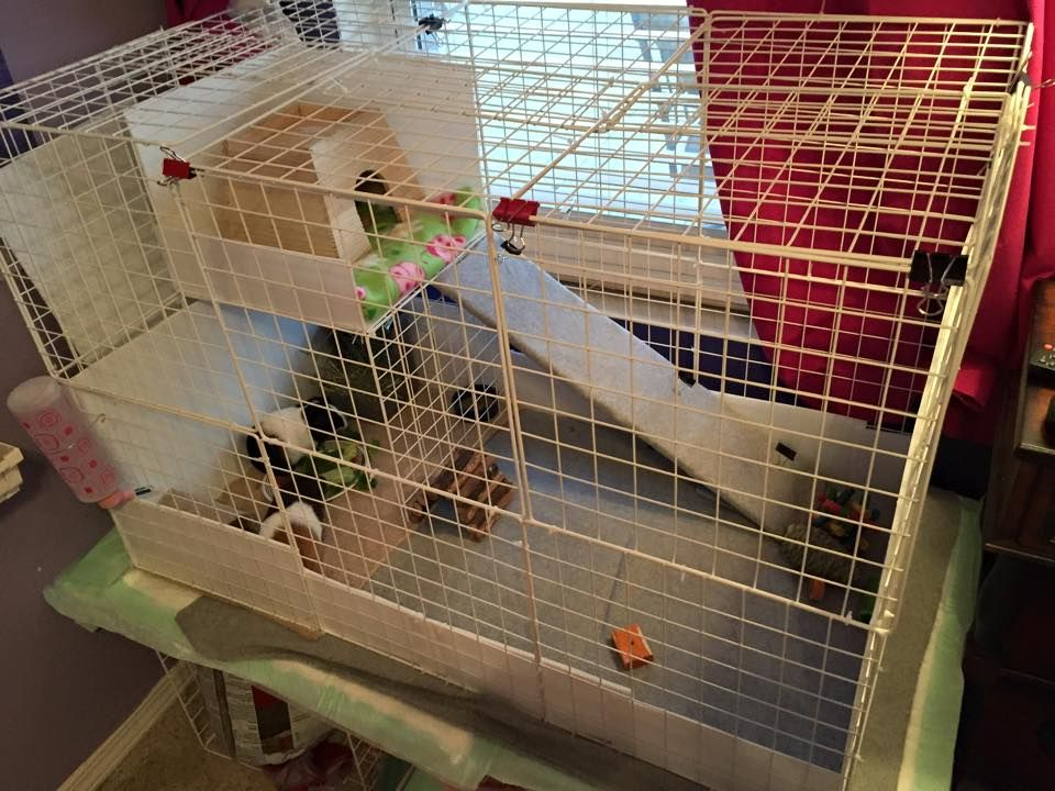 Pin On Guinea Pig Cages Custom Cavy Builds