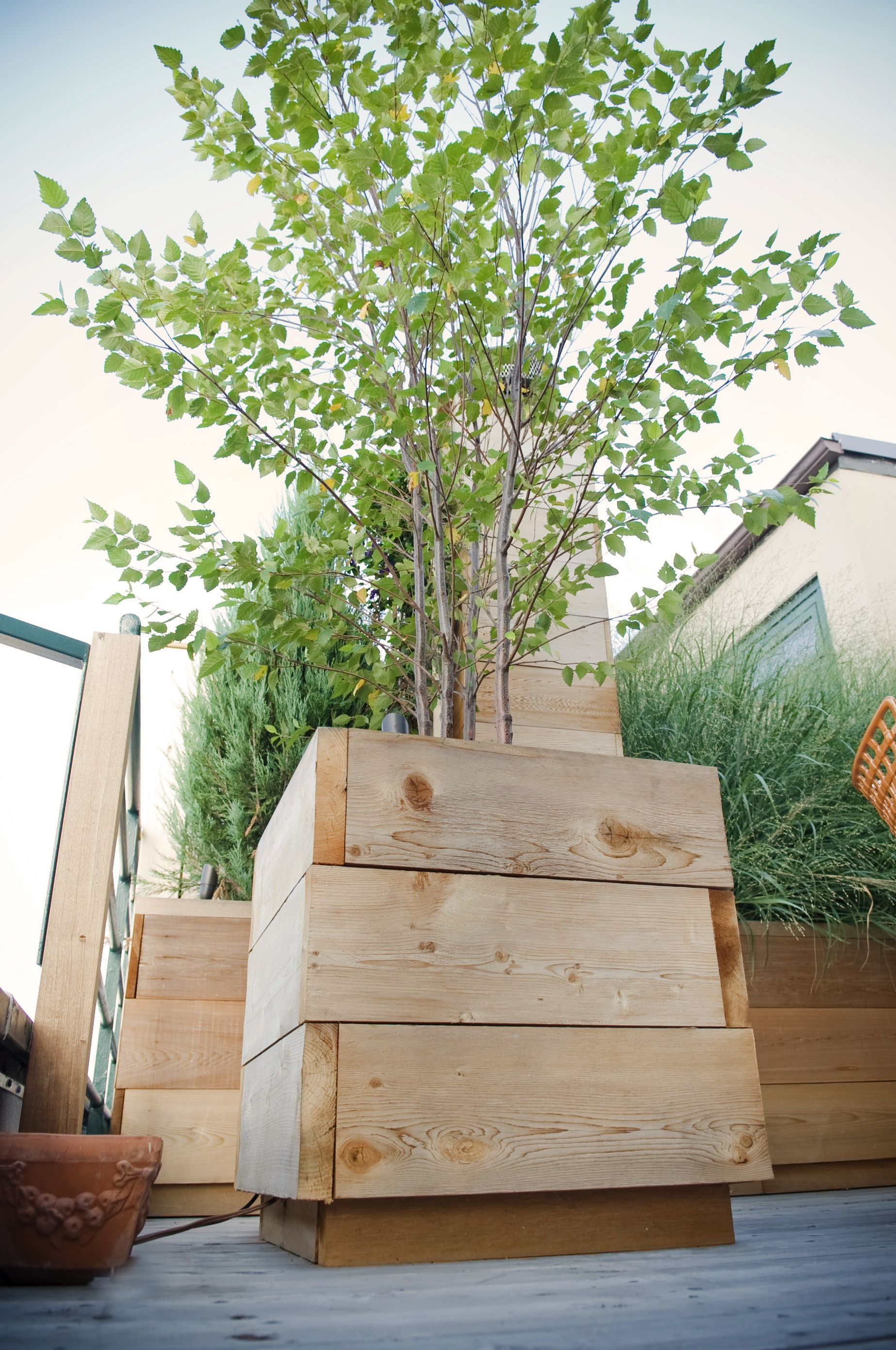 Roof Deck Planters Outdoor Furniture Birch Trees