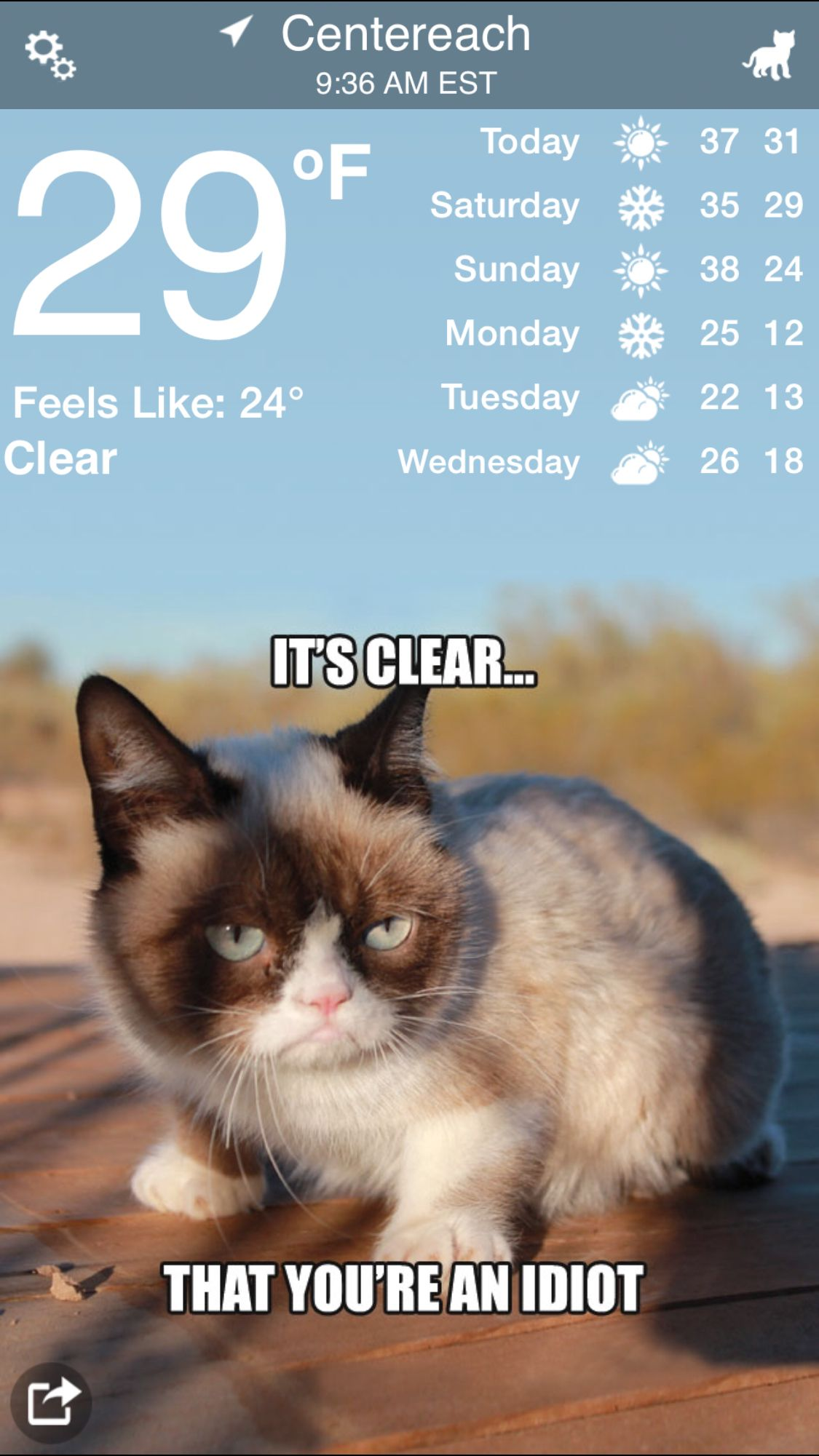 Centereach Weather Grumpy Cat Grumpy Humor Ny weather by zip code. pinterest