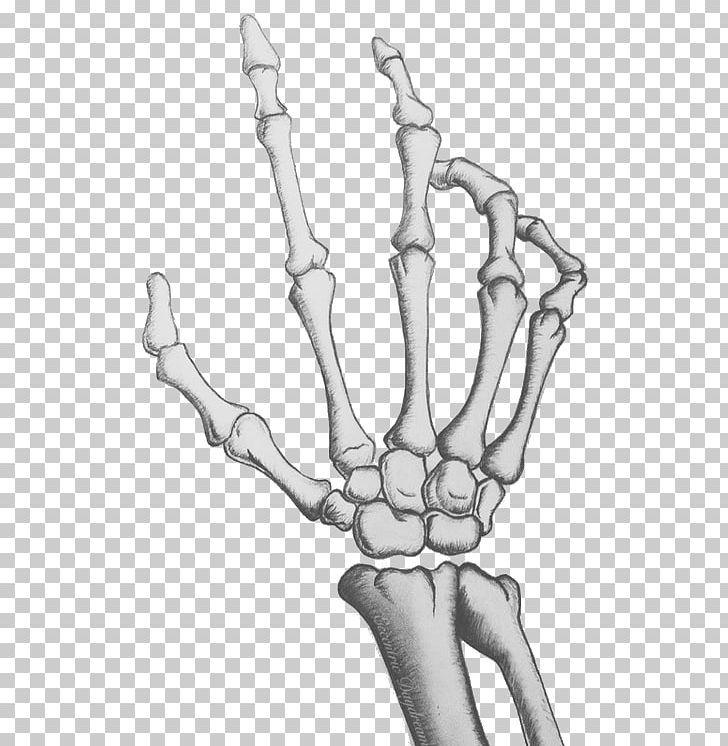 Human Skeleton Skull Bone Hand Png Anatomy Arm Black And White Bones Carpal Bones Skeleton Art Drawing Skeleton Drawings Skeleton Hands Drawing