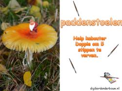Powerpoint Downloads - Paddestoelen digibordlessen