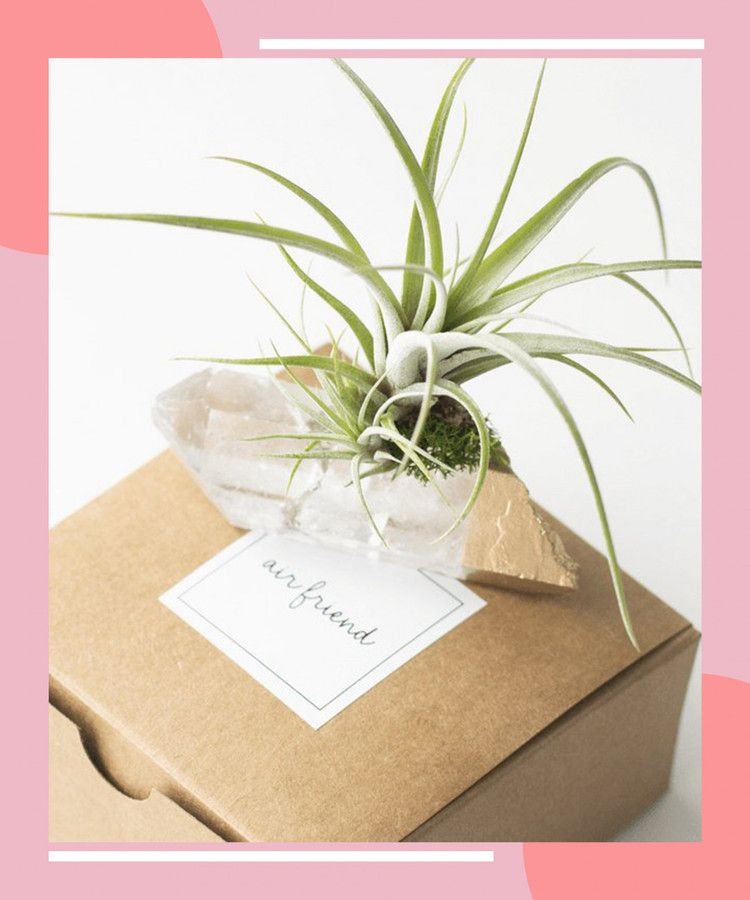 11 Crowd Pleasing Plants To Gift For Mom S Day