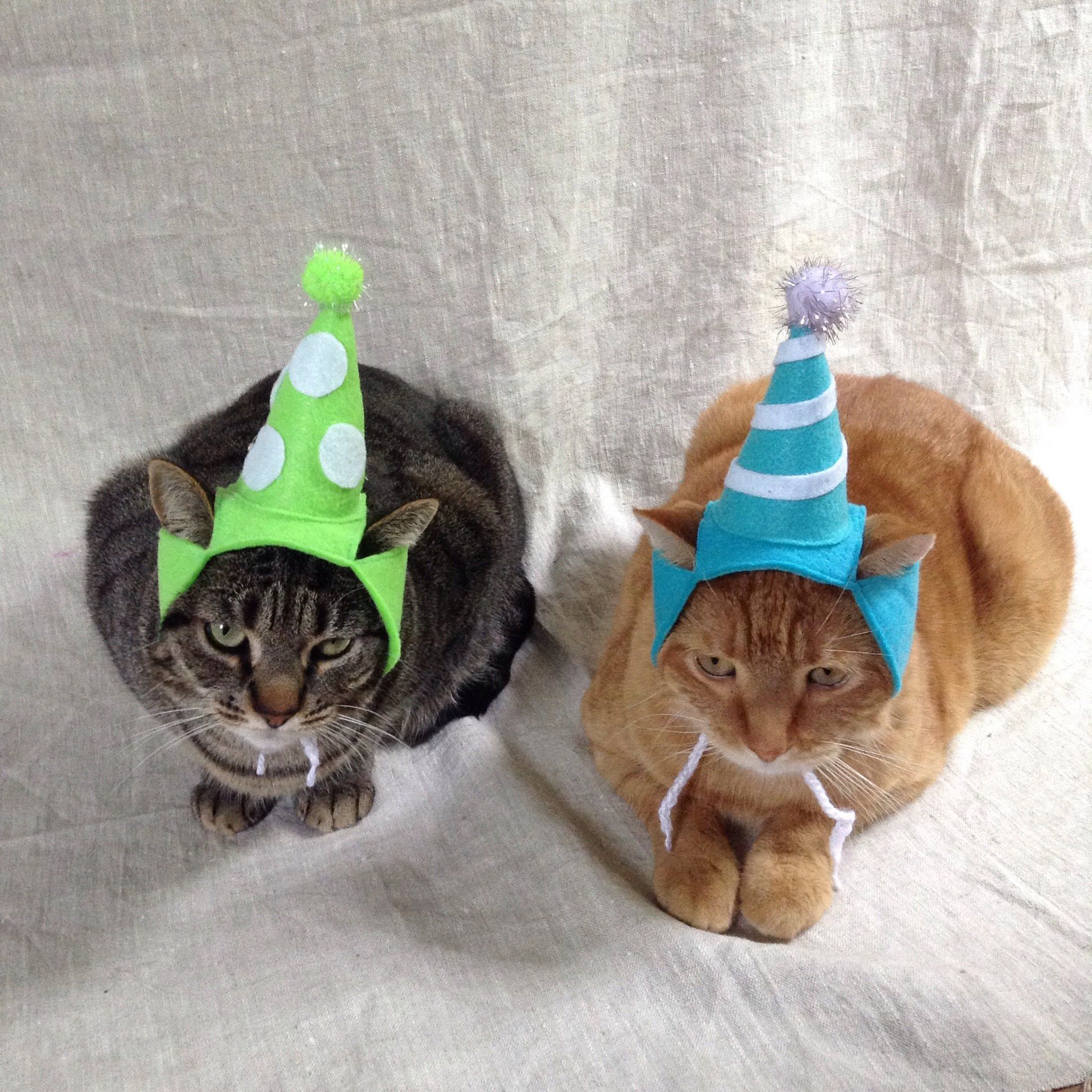 Birthday Party Hat For Cats Any Color Etsy Birthday Party Hats Cat Birthday Party Hats