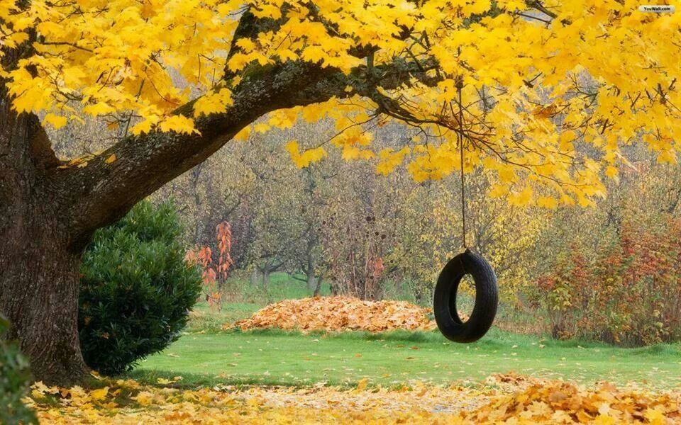 How I would love to use that swing in that gorgeous setting?? A life changing experience :)