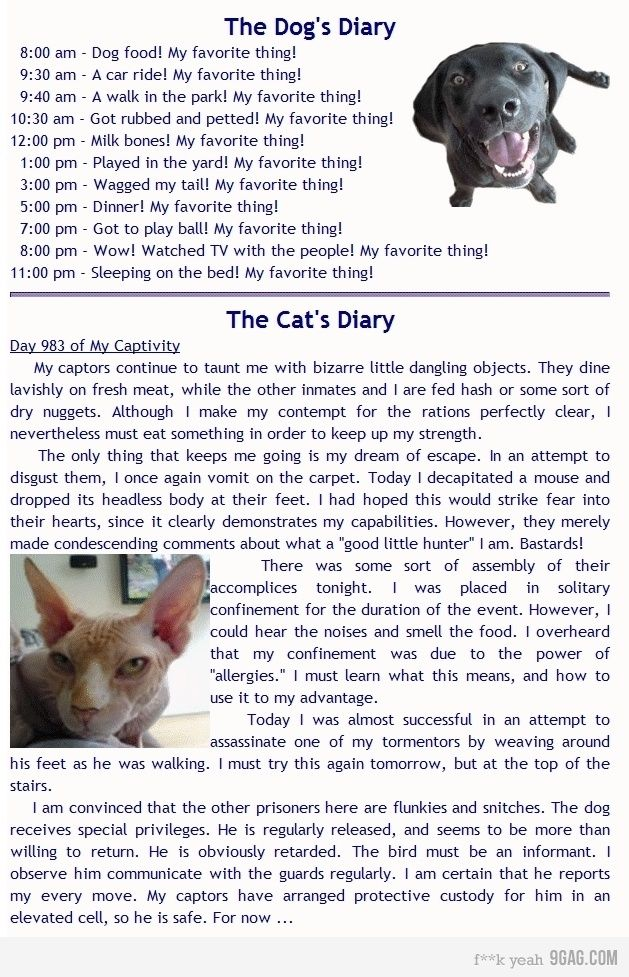 diary of a dog and cat