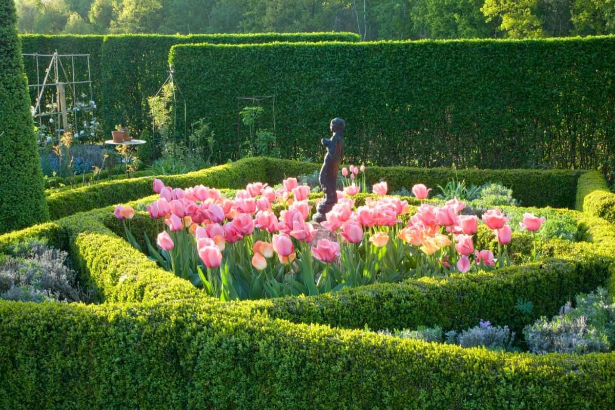 How to Build a Knot Garden (8 Photo Designs) in 8  Modern