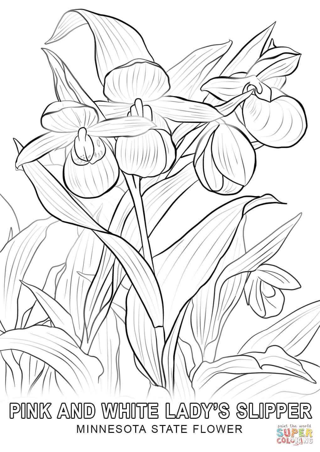 Minnesota State Flower Coloring Page Free Printable Coloring