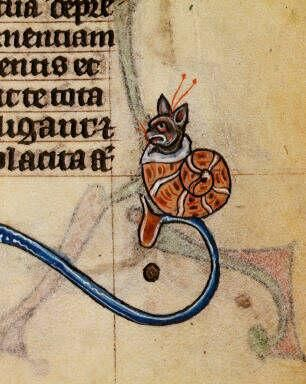 A cat in a snail shell!  From a medieval manuscript.