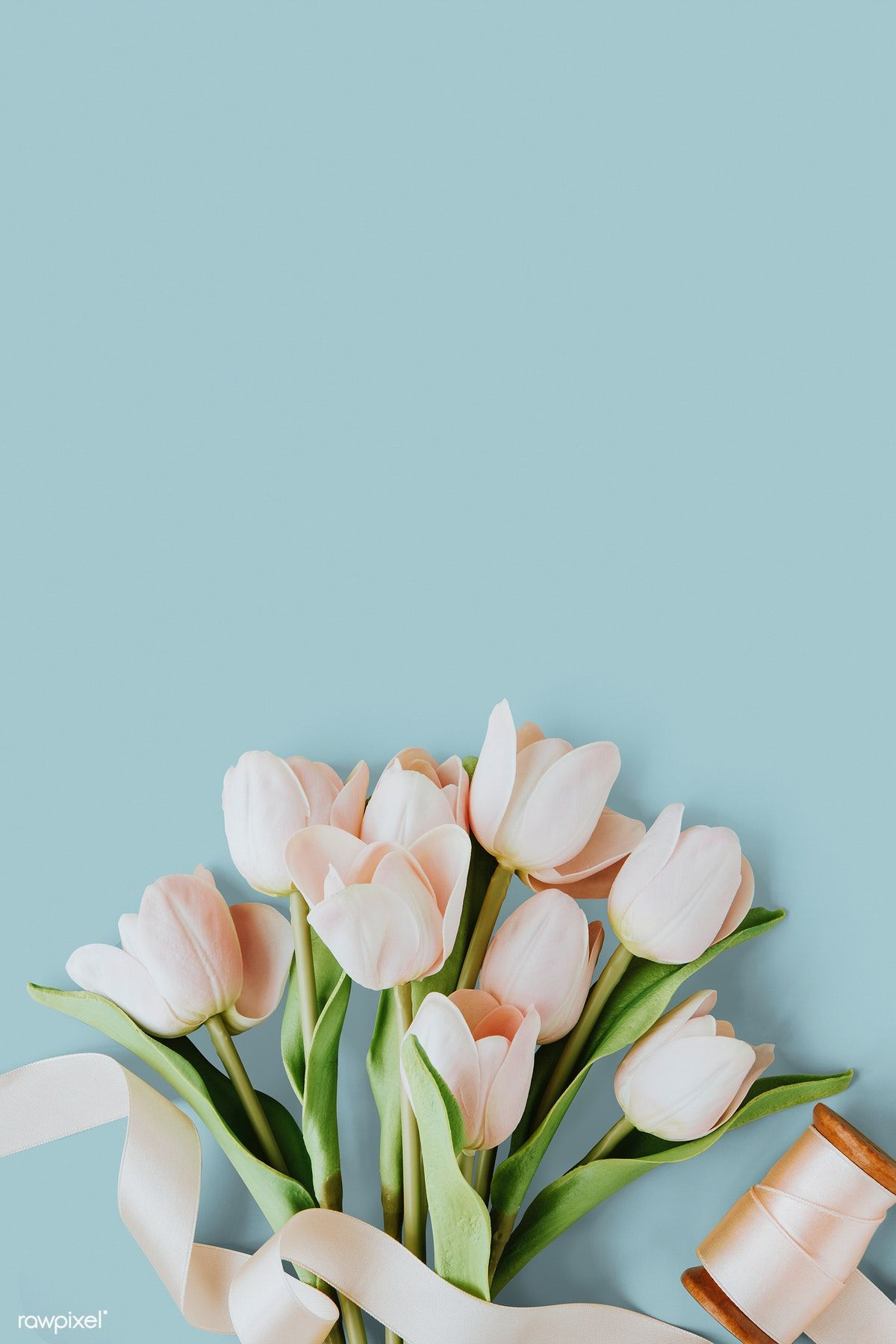 Download premium psd of Pink tulip on blank blue background template
