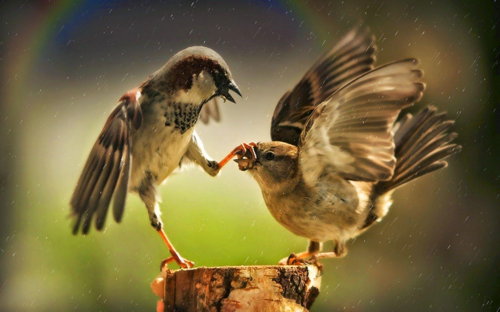 خلفيات طبيعية عالية الجودة 4k Ultra Hd Tecnologis Pet Birds Funny Birds Birds Wallpaper Hd