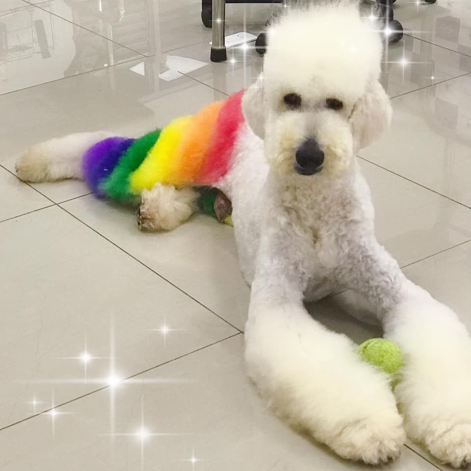 Amazing Monday For A Work Done By Our Wholesaler Groomer In Chile Claudia Rodriguez Zarate She Used Opawz Blow Pens Dog Grooming Pet Groomers Pet Grooming