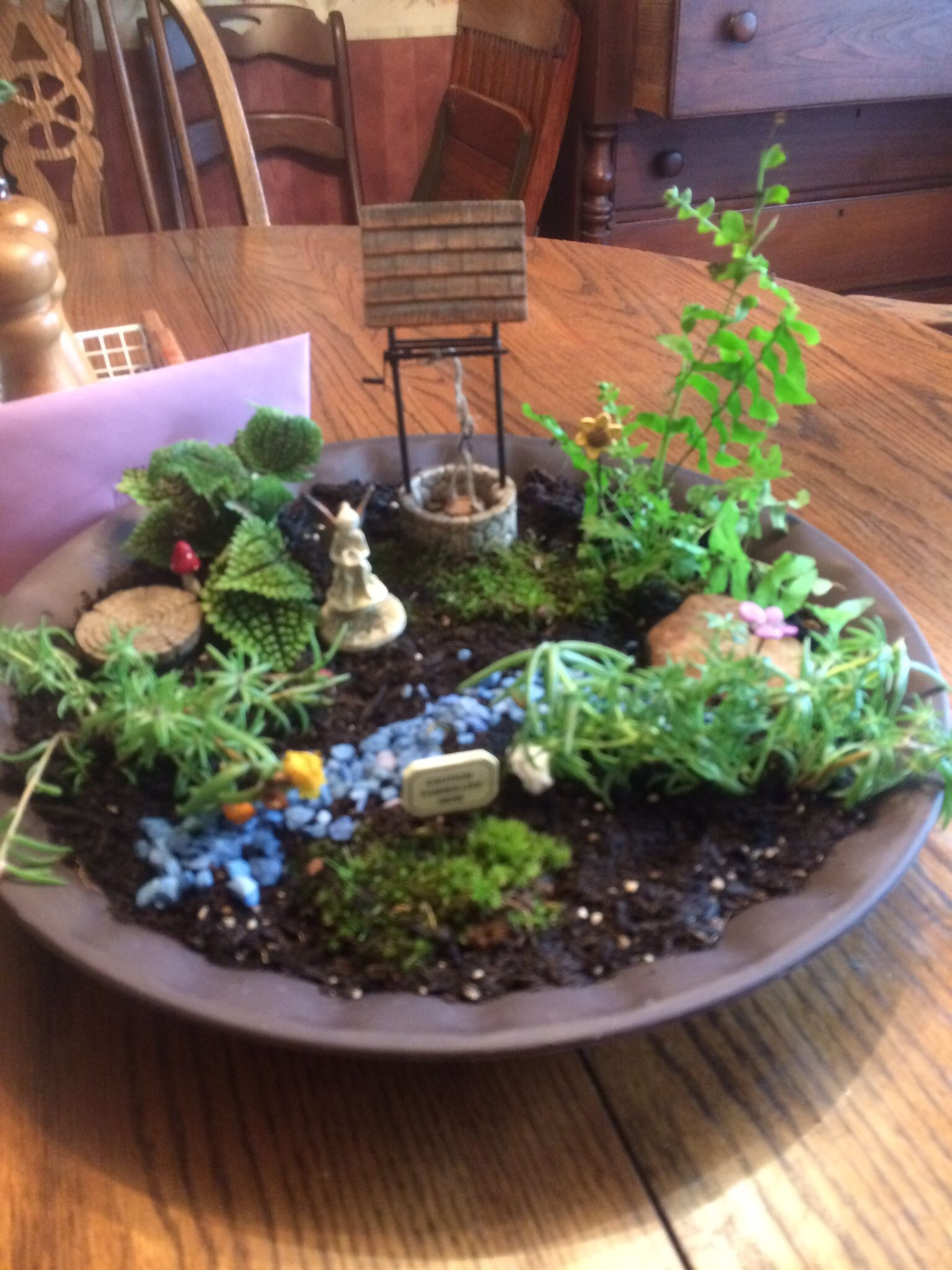 Saucer fairy garden for Mother's Day (With images) Fairy